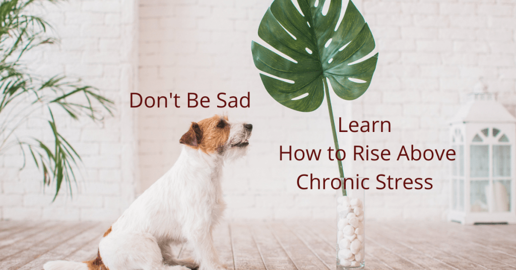 Don't Be Sad Learn How to Rise above Chronic Stress