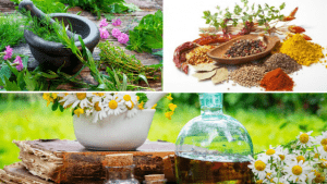 Healing Powers of Herbal Medicine: Supporting Optimal Health & Emotional Balance!