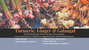 Get to the Root of Pain with Turmeric, Ginger and Galangal