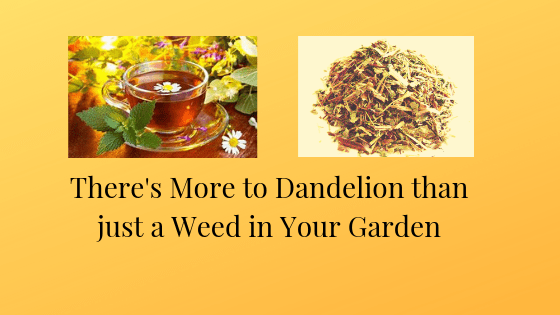 There's More to Dandelion than a Weed in the Garden. It is Great for a Healthy Heart, Liver and Kidneys